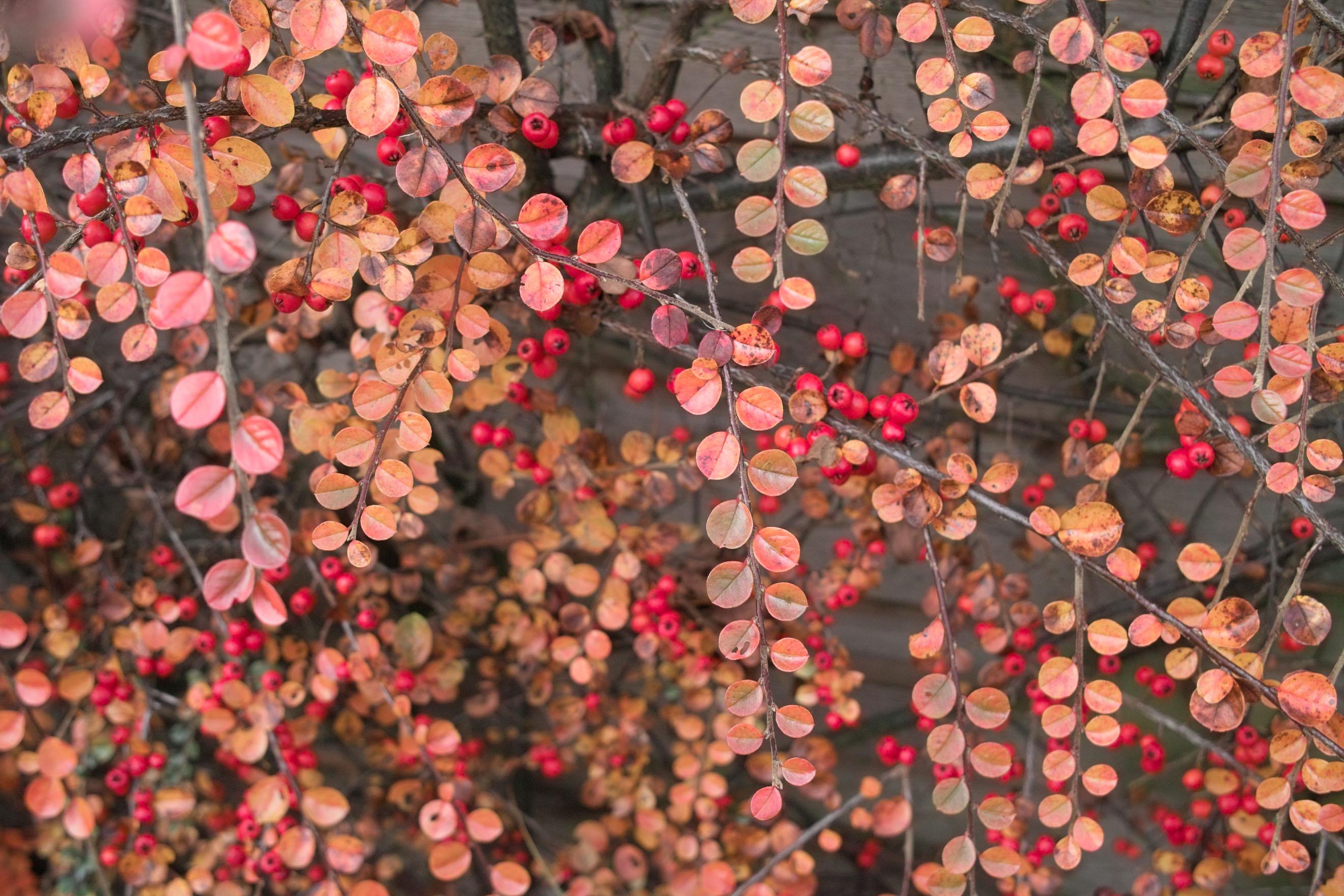 December 2014: Geuren, kleuren en smaken